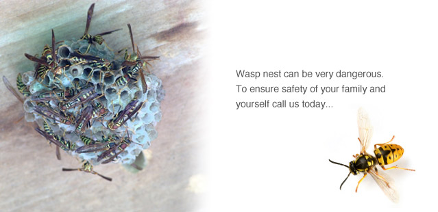 Wasp's Nest Removals